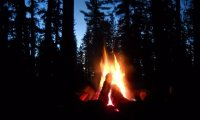 https://www.ambient-mixer.comnight campfire owl