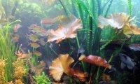 Wonderful Large Aquarium