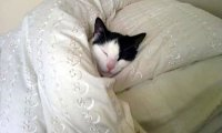 https://www.ambient-mixer.comSleeping with Your Cats