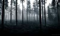 Forest Full of Nightmares