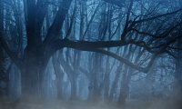 Witchy Forest