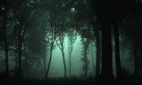 Jungles of Chult - Night #1