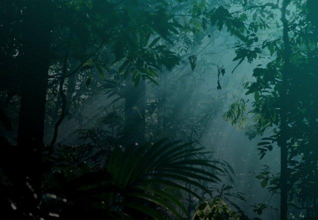 Tropical Island Beach Ambience Sound: Peaceful Jungle Night Audio Atmosphere