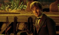 Inside the Case-Newt Scamander