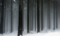 Som ambiente para florestas no inverno