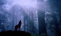 https://www.ambient-mixer.comwandering alone throught the rainy forest with wolves