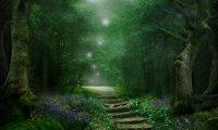 Fairy haven