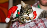 Christmas with my Cat