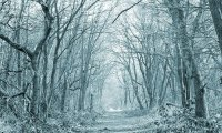 Narnia's Winter Woods