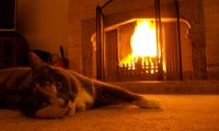 http://www.ambient-mixer.comCat's purrs by the fireplace