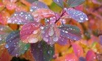 Autumn Rainfall