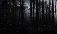 https://www.ambient-mixer.comHeavy rain, thunder, campfire, wind and some crows.