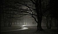 A Walk Through A Dark Forest