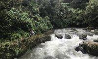 An Ecuadorian, humid, rain-forest-like ambiance