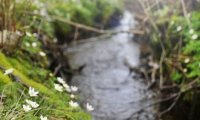 Nature Babbling Brook