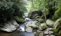 Woodland Meditation