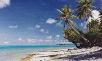 Caribbean Island Jungle