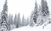 Snowy Ravenclaw Day
