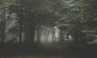 http://www.ambient-mixer.comHorror Forest