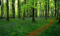 A non threatening woodland