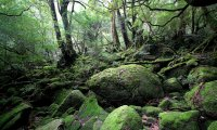 Princess Mononoke's Forest