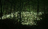 The Firefly Forest