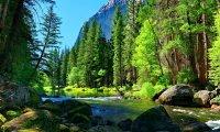 natures dream ocean forest