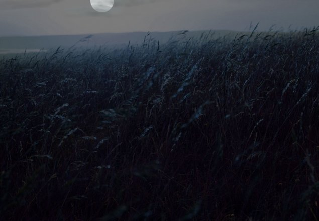 A Grassy Meadow After Dusk Audio Atmosphere