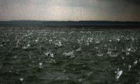 Rain on rolling ocean waves